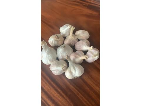 台灣蒜球(乾)(600g+-10%/散裝)